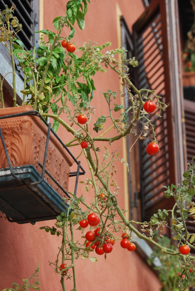 My two weeks in Italy: Windows and Balconies (5/6)